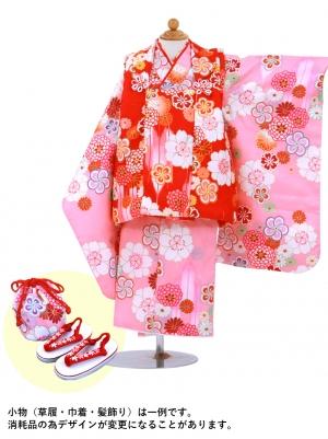 ピンク地に桜と菊、赤の被布コート(七五三)