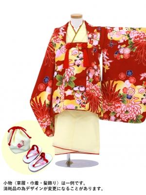 クリームイエローの着物と臙脂に菊の被布コート(七五三)